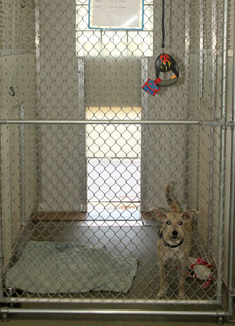 dog in the lucky dog lodge kennel