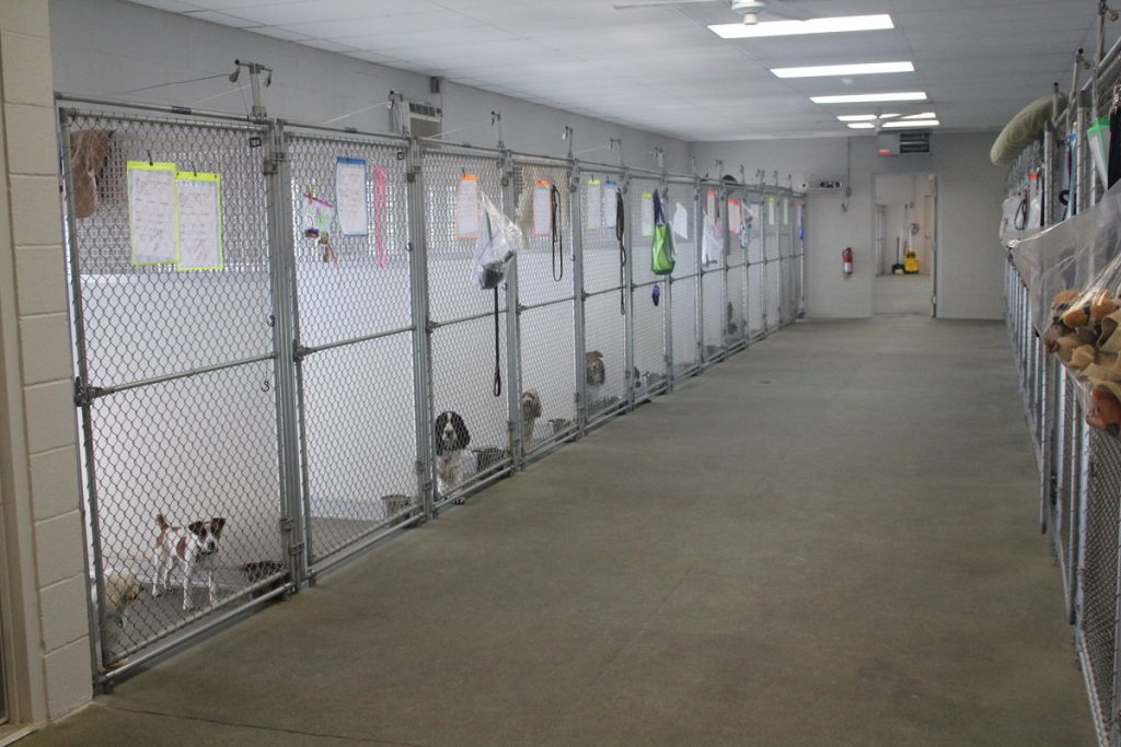 inside kennel run at lucky dog lodge