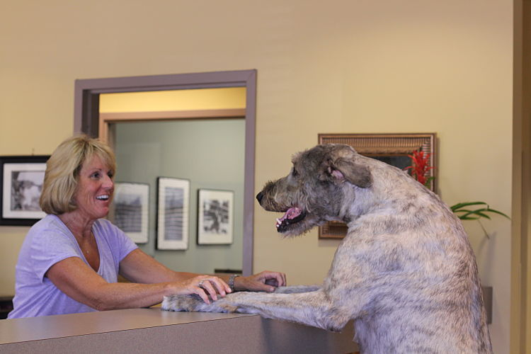 Sarah Thompson, owner of Lucky Dog Lodge with her Irish Wolfhood who has his paws on the front desk