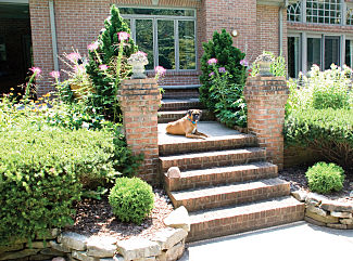 dog on steps of an invisible fence house